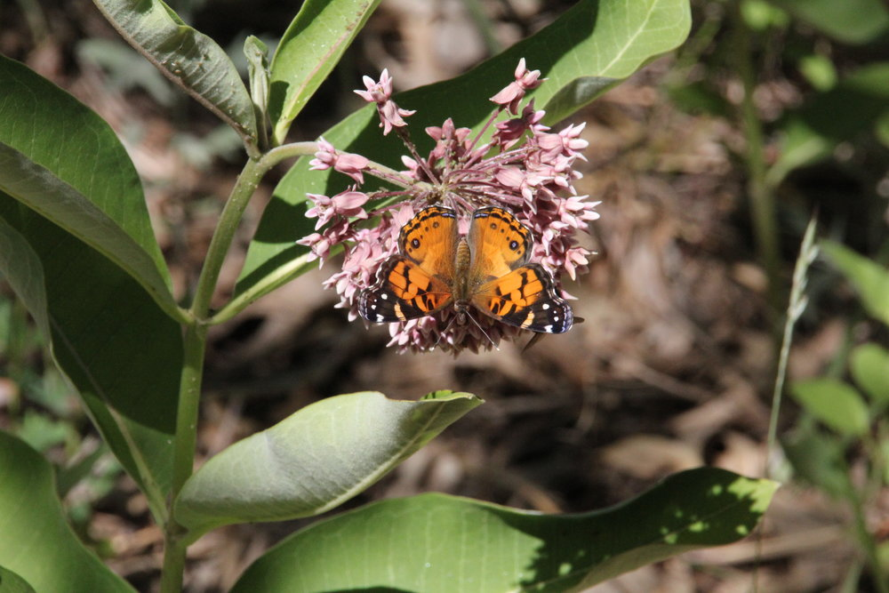 Butterflies (6).jpg