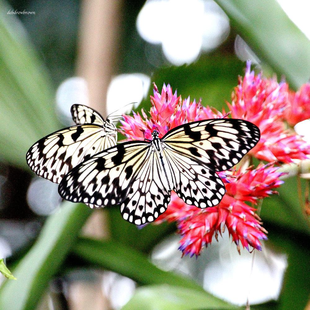 Butterflies (9).jpg