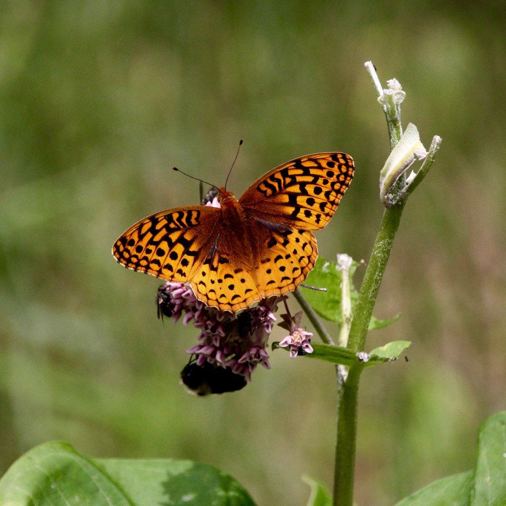 Butterfly (3).jpg