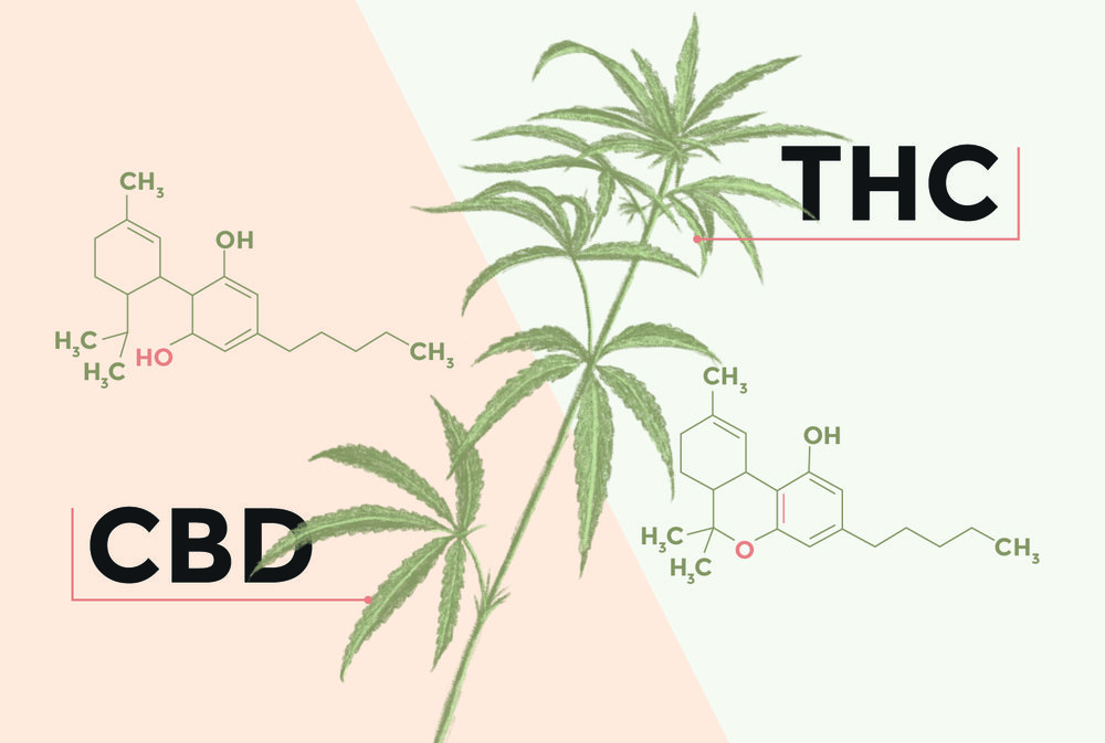 THC CBD differences-03-02.jpg