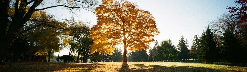 super epic yellow tree cropped.jpeg