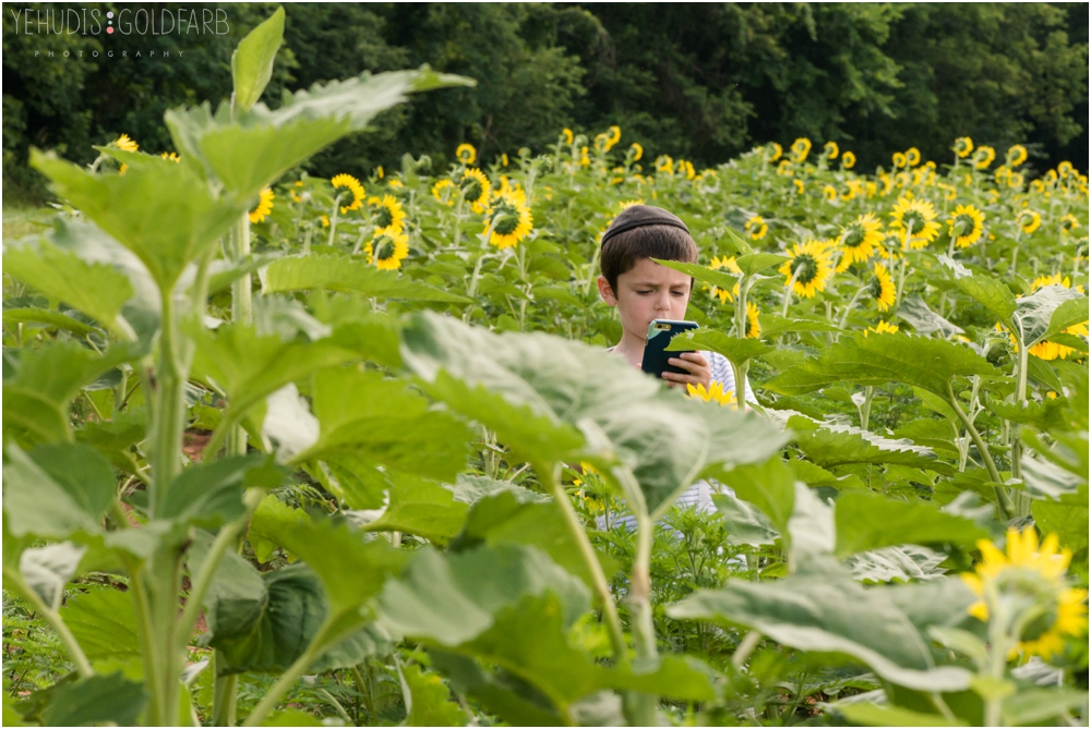 Sunflower-Mini-Sessions-Yehudis-Goldfarb-Photography_0005.jpg