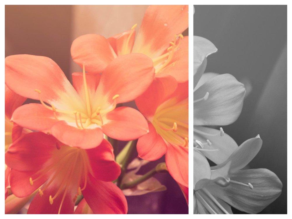 flowers-bw.jpg