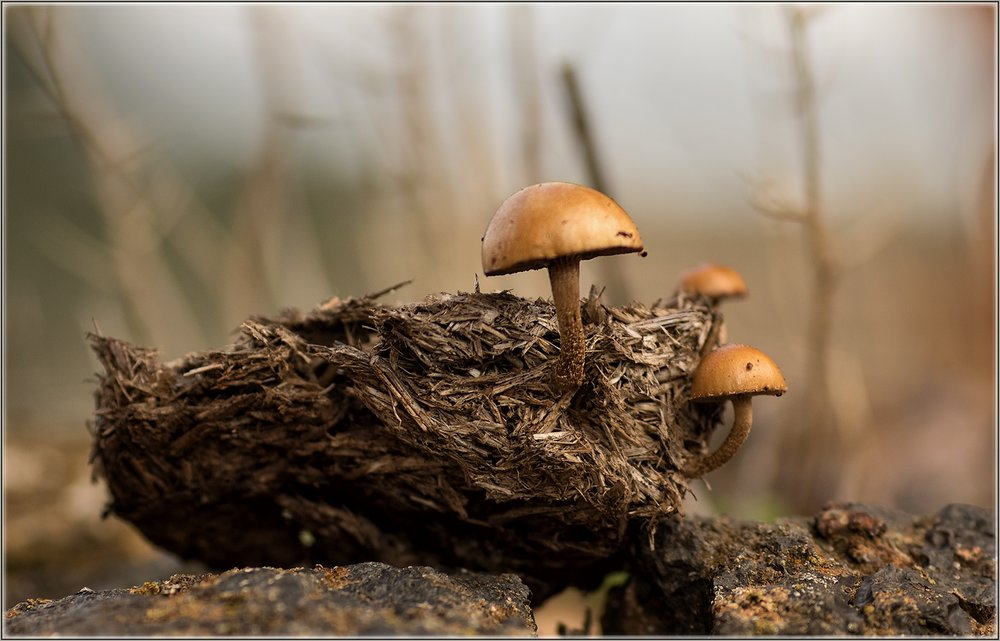 - FungiImage provided by Christine Rowland