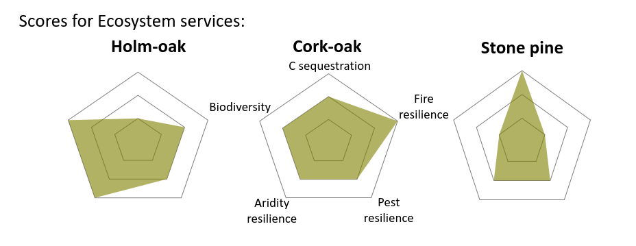 Oak and pine scores resistance.PNG