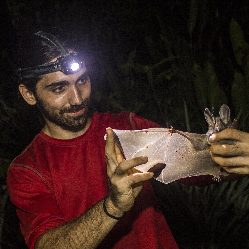 Adrià López-Baucells examining a bat
