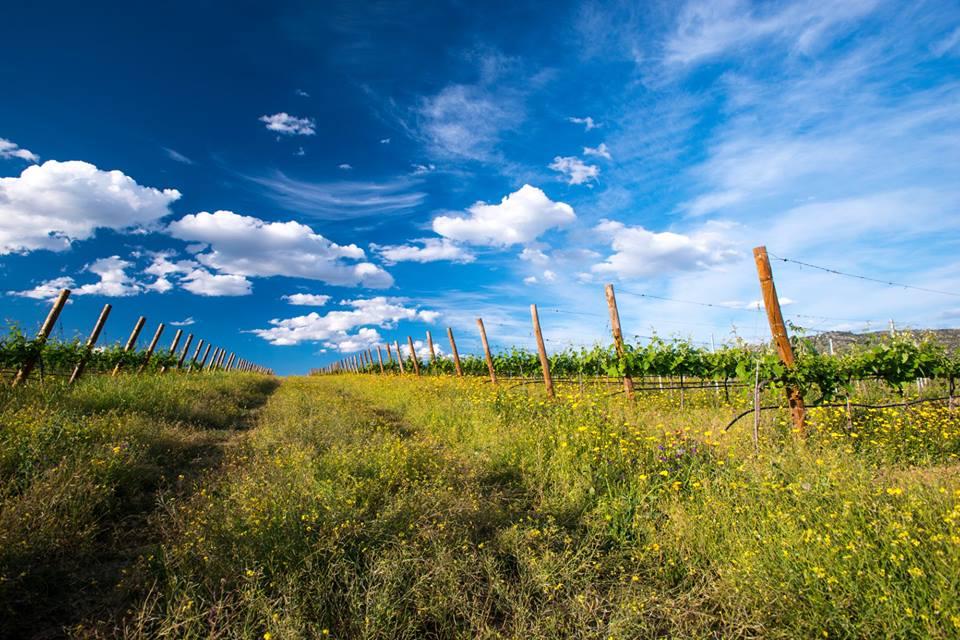 Heat waves threaten the European wine industry the most. ©Symington
