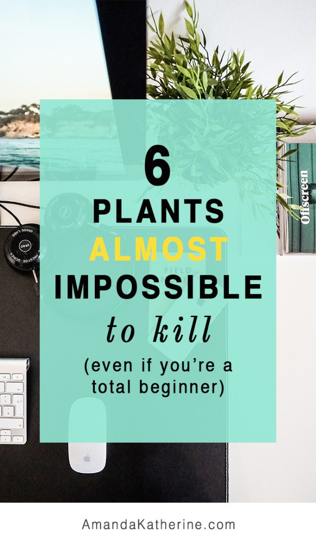 6 indoor plants impossible to kill even if you're a beginner