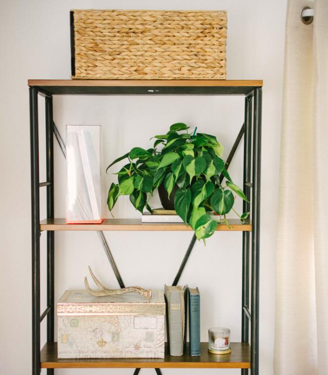 wax-plant