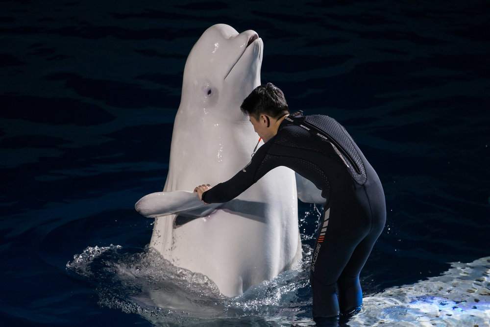 ANIMALS_BELUGA_08.jpg