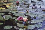 Water_Lillies.jpg