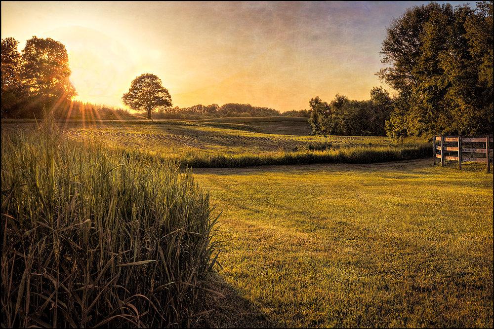 beautiful sunset and corn field