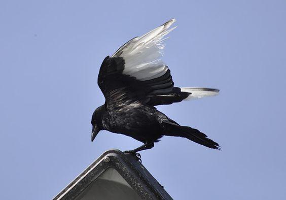 white wing.jpg