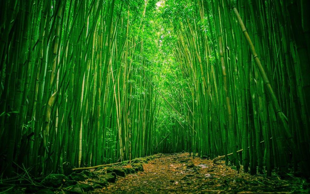 Bamboo-Forest-Wallpaper-Photos.jpg