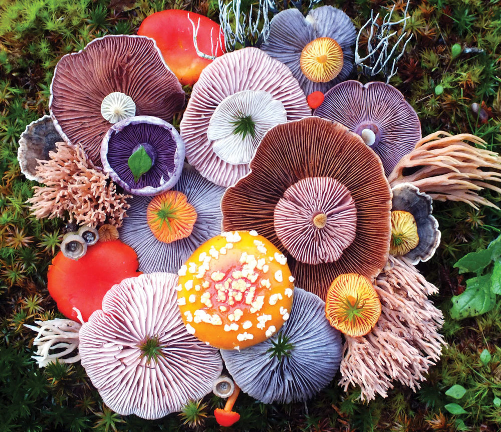 Vibrant mushroom arrangements photographed by jill bliss - This Is Colossal, August 2017