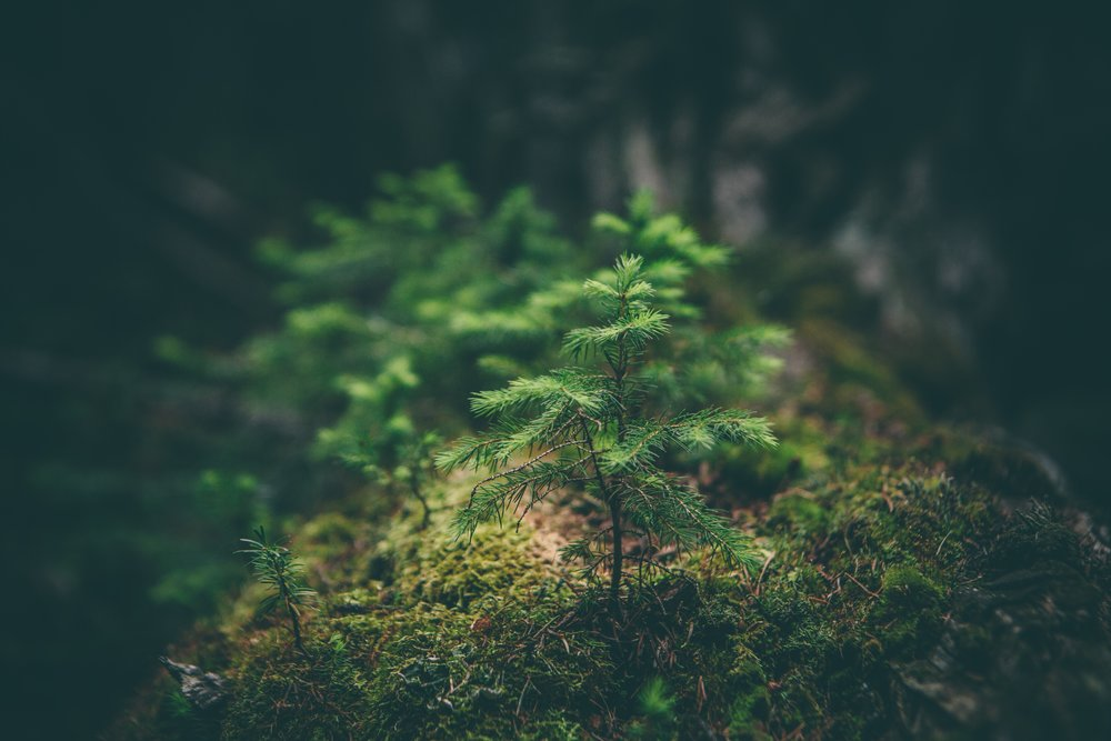 'Forest bathing': how microdosing on nature can help with stress - The practice, long-popular in Japan, is gaining traction in the U.S. as a way of harnessing the health benefits of being outdoors.The Atlantic, June 2017