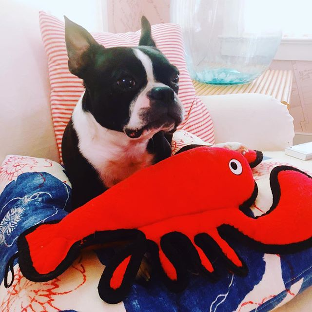 Jackson and his lobster want to wish everyone except Trump a happy Fourth of July 🇺🇸