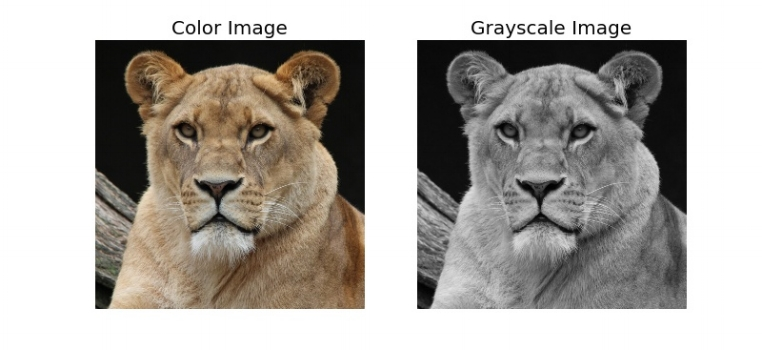 Original Color and Grayscale.jpeg