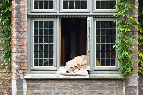 dog-in-fresno-window-.jpg