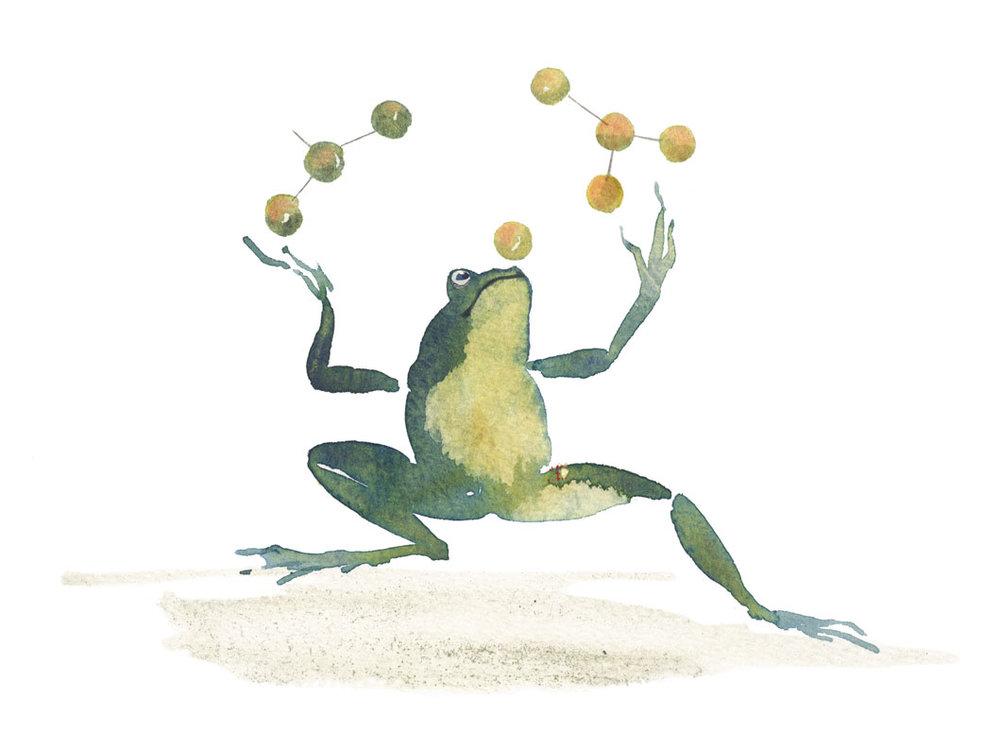 Frog-2_david_holmes.jpg