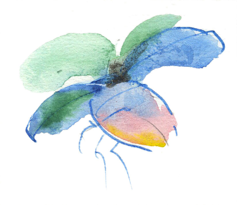 Flying-beetle_david_holmes.jpg