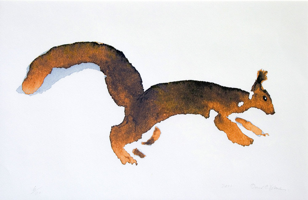 Red-Squirrel_david_holmes.jpg