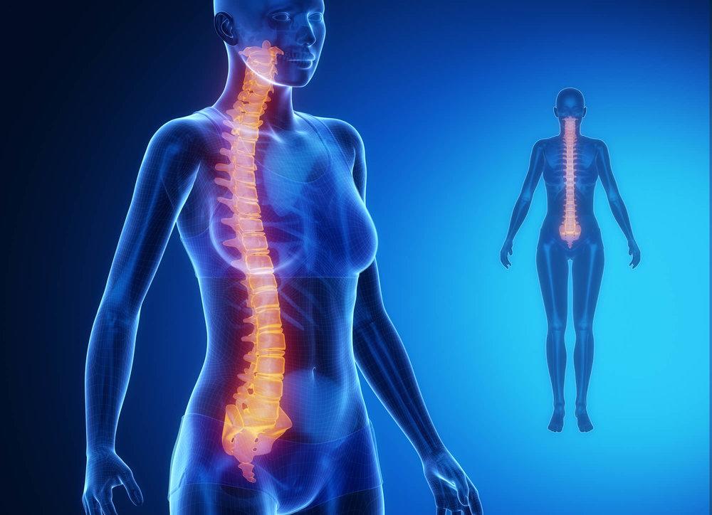 colonna vertebrale traumi problemi cure francesca scaglia life counseling bra cuneo torino piemonte rimedi naturali malattie problemi fisici.jpg