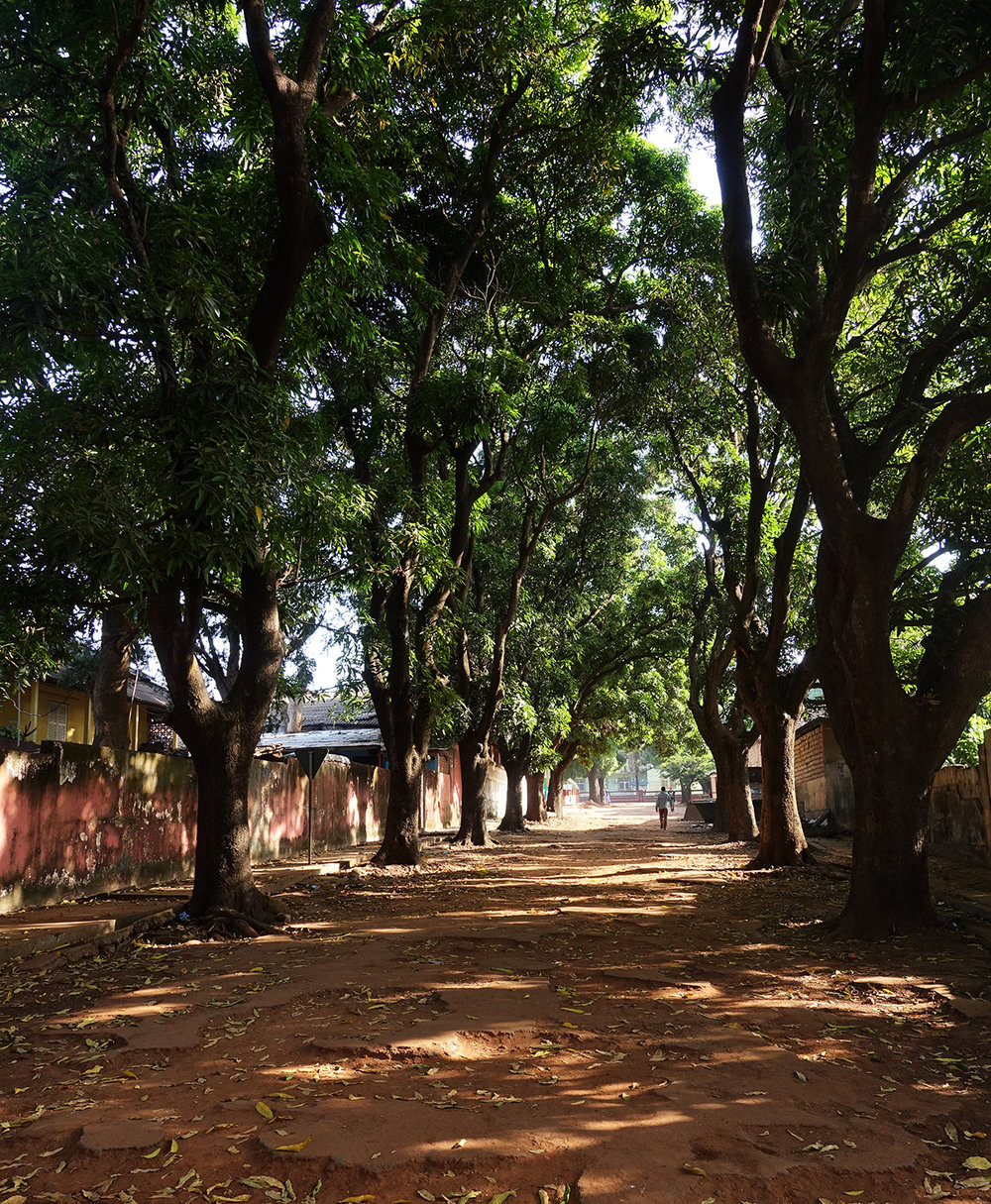 #streetsofbissau mangostrees in Bissau