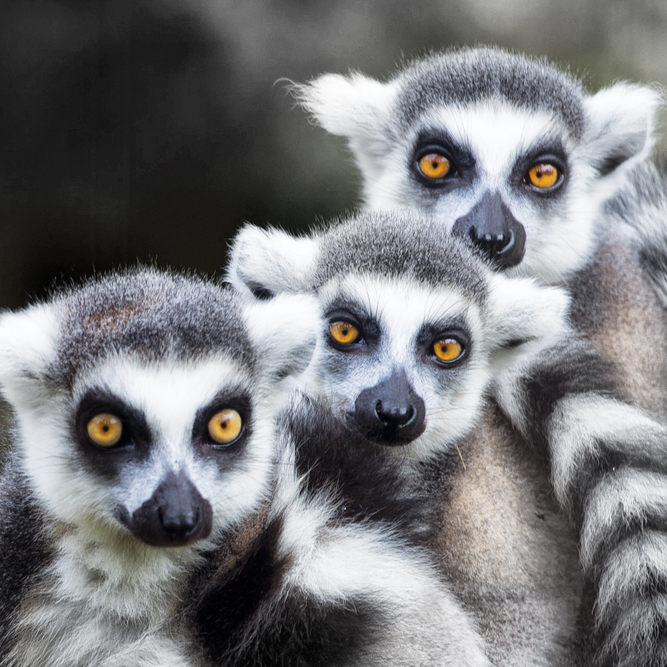 OUR TEAM - We are a small group of friends with a desire to do business without losing our souls. We also really like lemurs... and equally sized paragraphs.