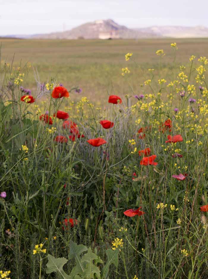 flores-silvestres-duero.jpg