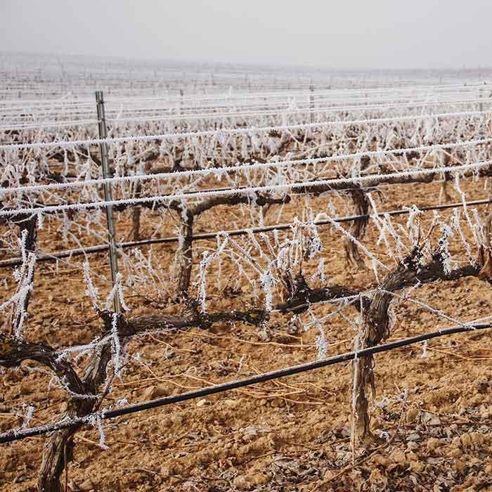 bodega-nieve-snow-vineyard-tarsila.jpg