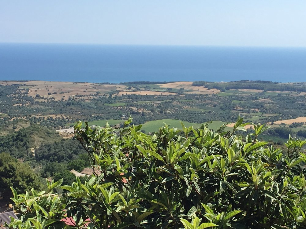 Ciro Superiore, Calabria, Southern Italy where my great grandparents were from, land dotted with sacred olive tree beings overlooking the Ionian Sea