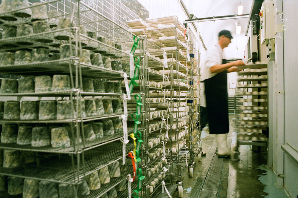 cheese_on_racks_1-optimised.jpg