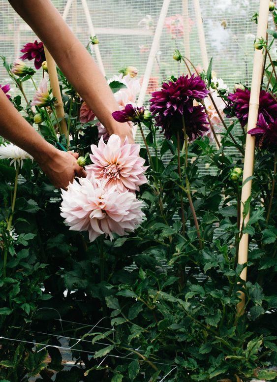 цветы 1.jpg