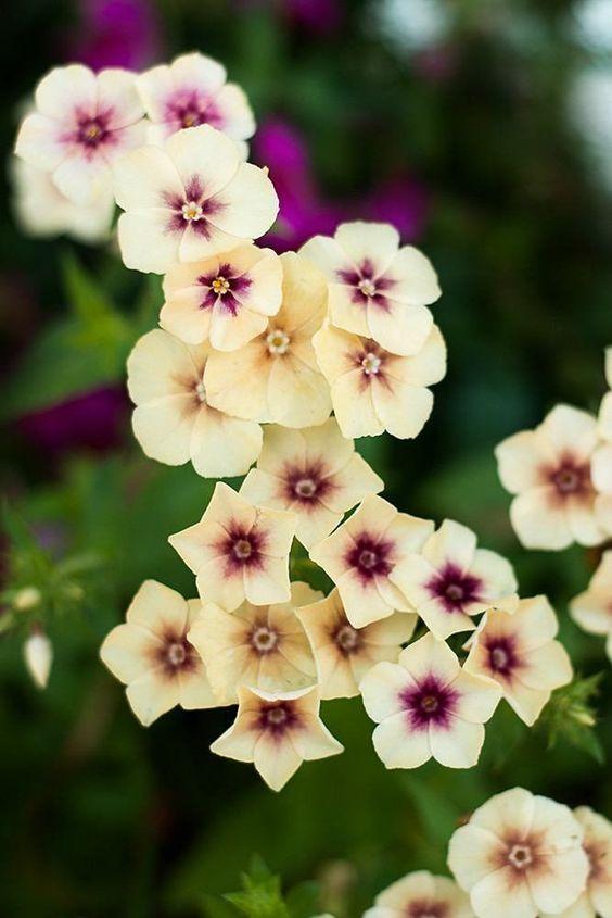 цветы 5.jpg