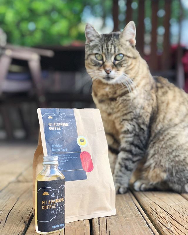 This coffee is the cat's meow. Something special from @mtatkinson_coffee. Whiskey barrel aged beans for 18 months.