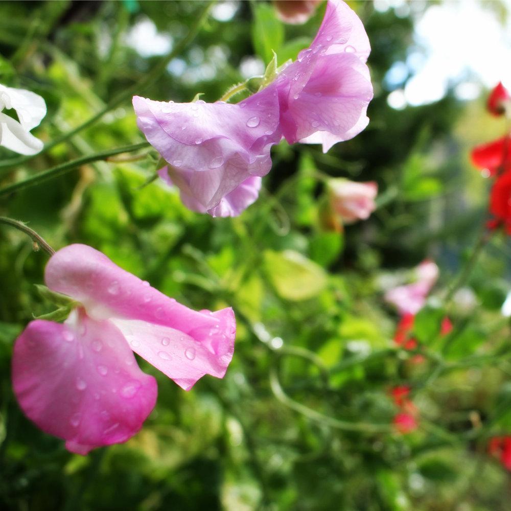 desiree-dunbar-secret-garden-society