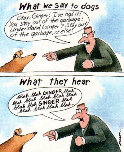 Far Side Dogs