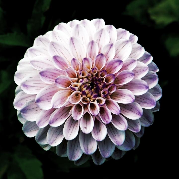 flower-984089_960_720.jpg