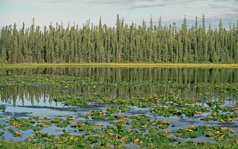 A small pond in the Eastern Boreal Forest.© DUC