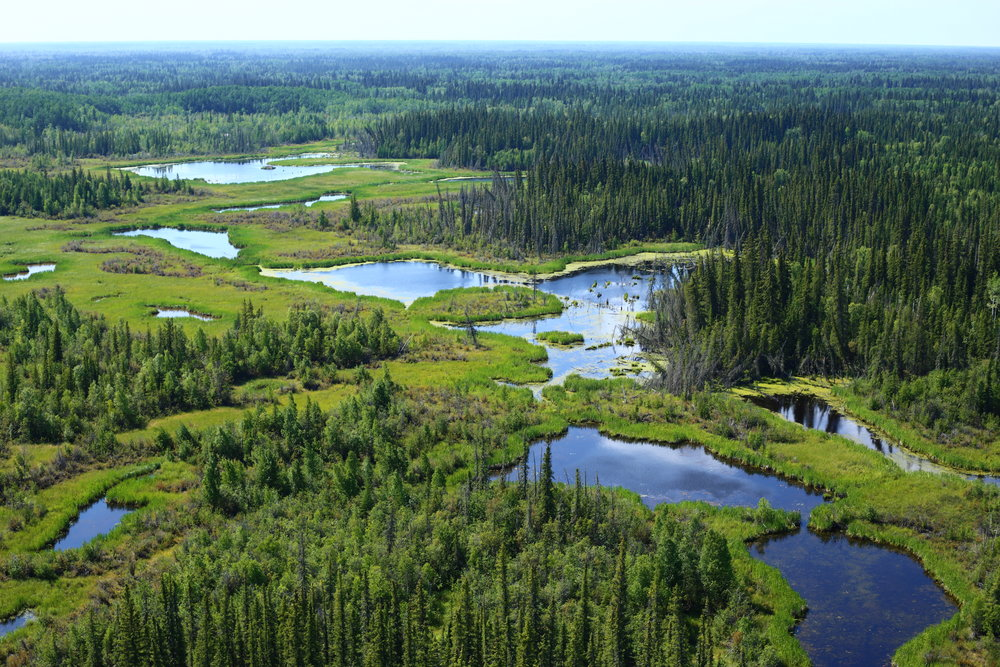 Akaitcho.Wetlands.Inventory.DUC.IMG_6042.jpg