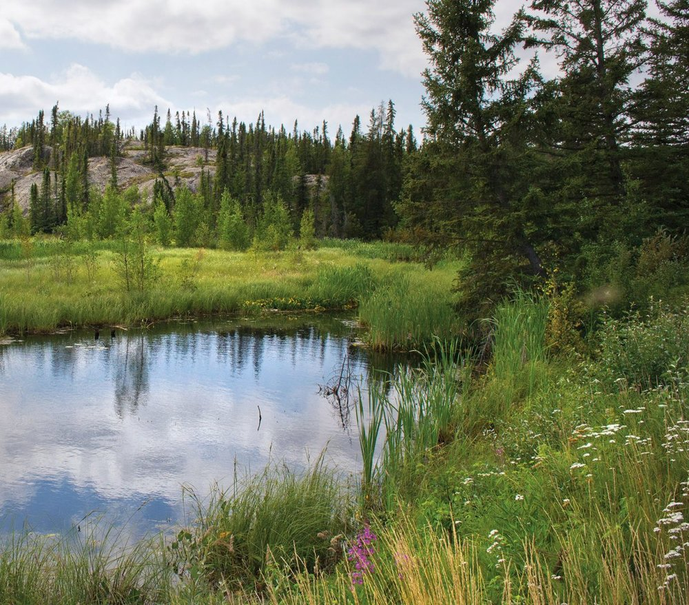 A boreal wetland scene near Yellowknife, N.W.T. ©DUC