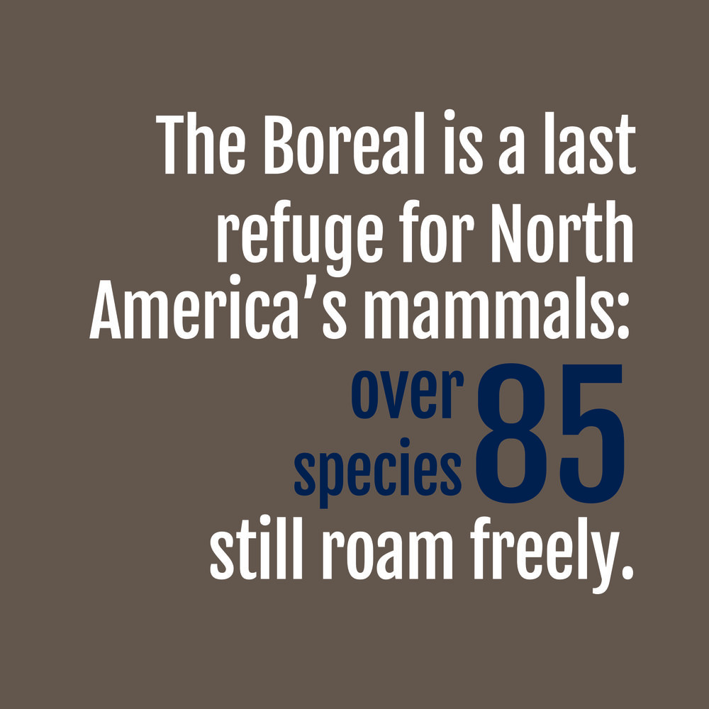 Wildlife - Fact