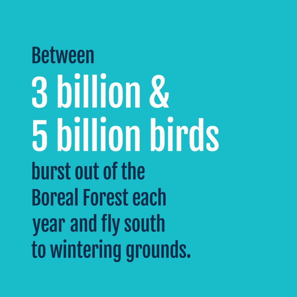 Birds - Fact