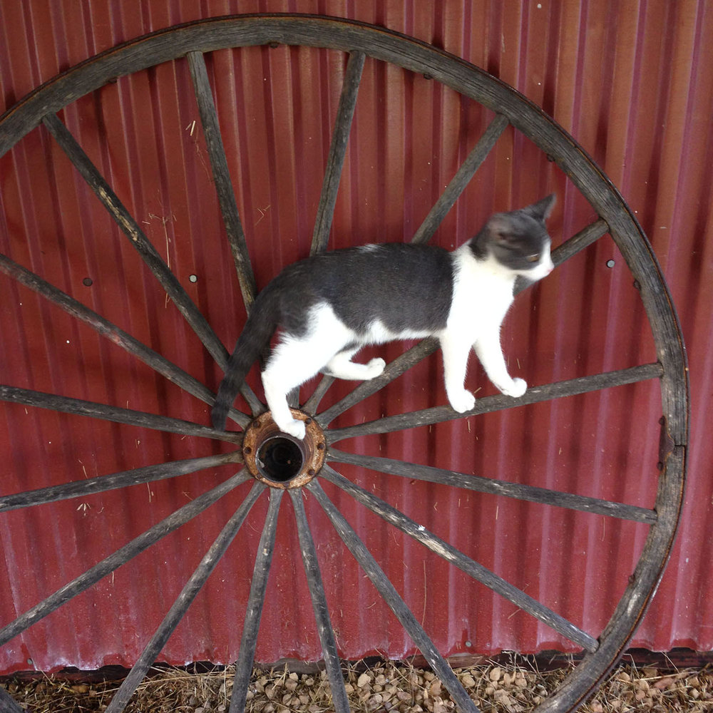 cat.barn.wagon.wheel.jpg