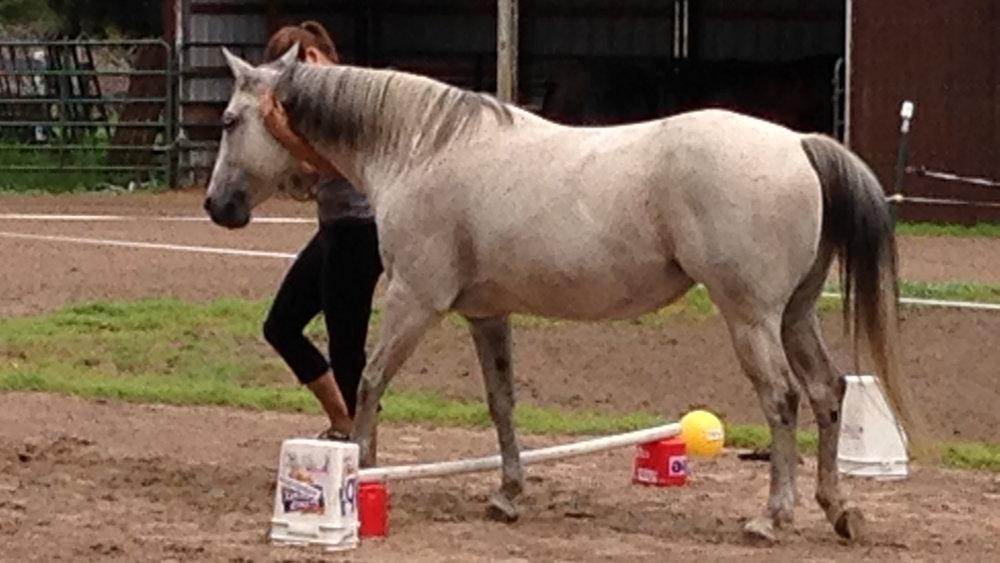 teacher-leading-horse-online-class.jpg