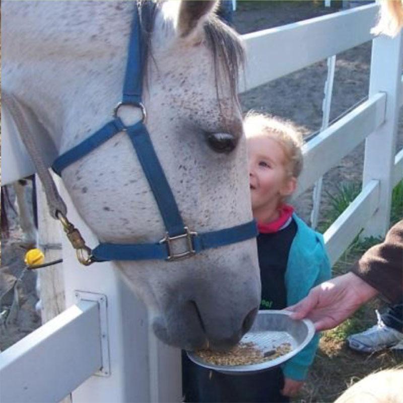 horse-grain-treats.jpg