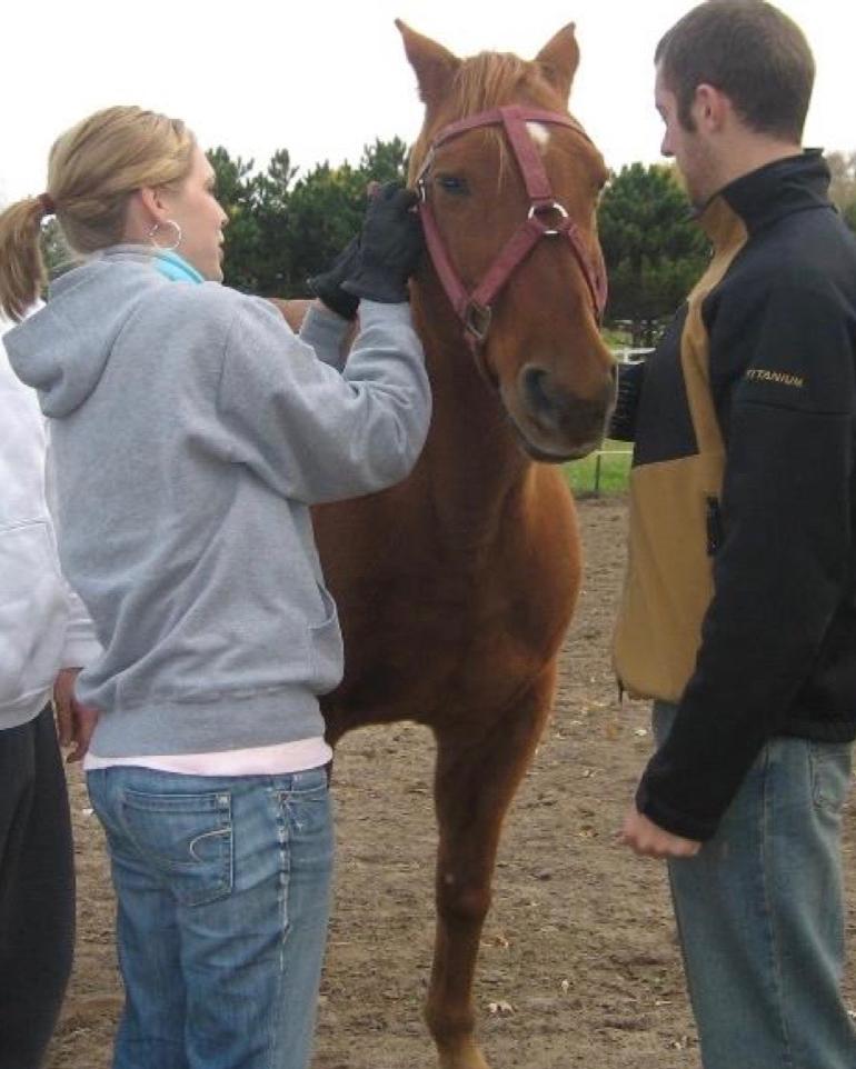 halter_equine_learning.jpg
