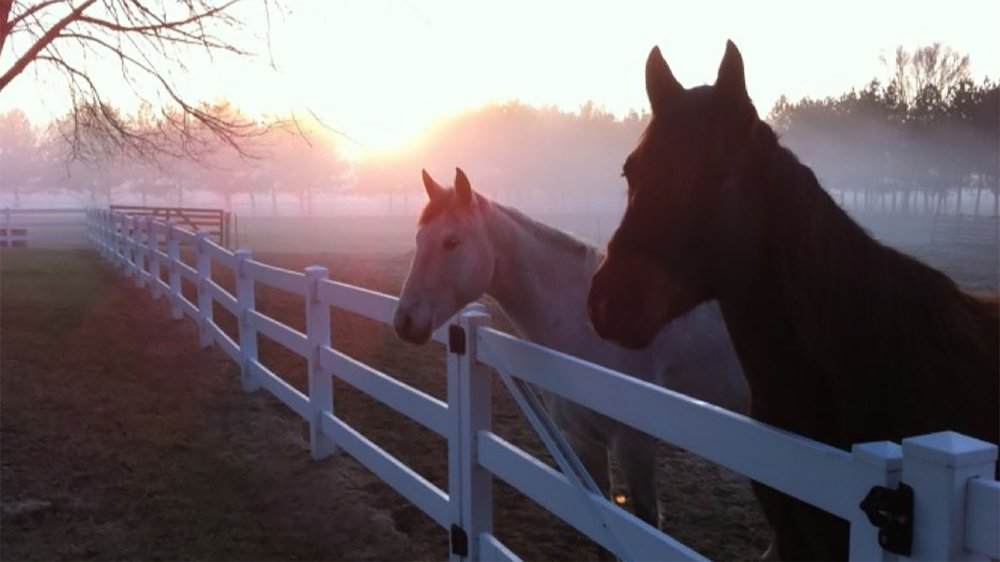 horses-fence-sunrise-cross-p-ranch.jpg