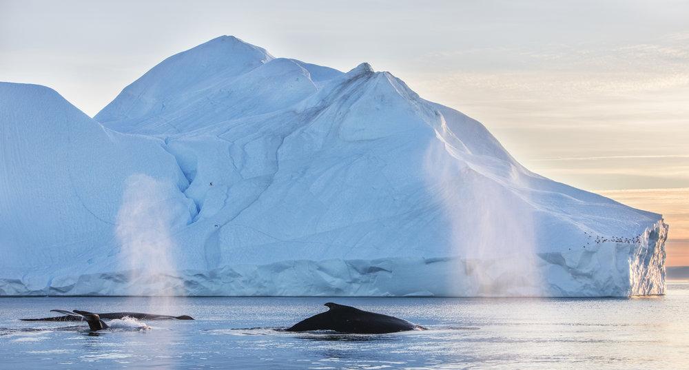 1 hour Arctic  040.jpg
